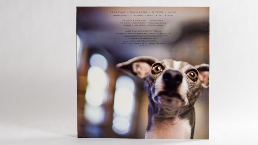 Shellac – Excellent Italian Greyhound